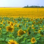 Sunflower Alliance Meeting, Sun Nov 5