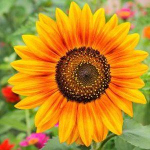 Sunflower Alliance Meeting @ Bobby Bowens Progressive Center