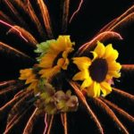 Sunflower Alliance Meeting, June 23