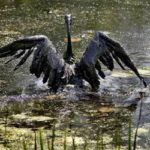 Call Your Assembly Rep!  Help Stop Tar Sands Spills, AB 936