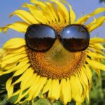 Zoom Sunflower Alliance Meeting, June 14–note new time