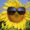 No Sunflower Alliance Meeting, August 18