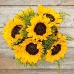 Sunflower Alliance Meeting, October 27