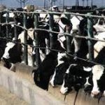 Tell Newsom: Factory Farms = Fake Climate Solution