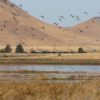The AG Weighs in on Suisun Marsh Gas Drilling